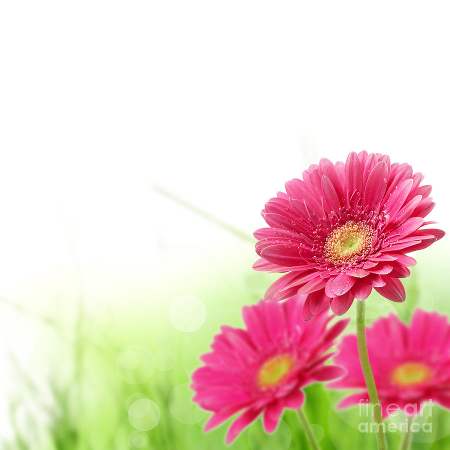 red-spring-flowers-boon-mee